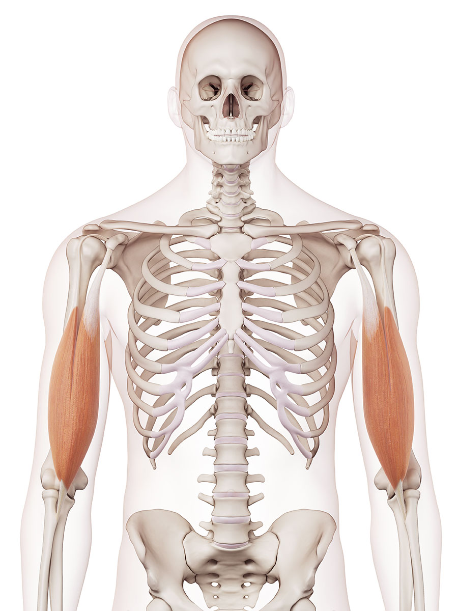 Anatomy Archives - Chape Fitness